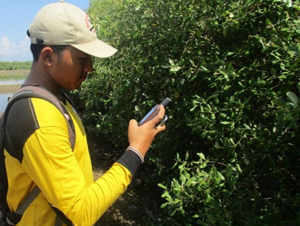 Pemetaan Mangrove Rembang