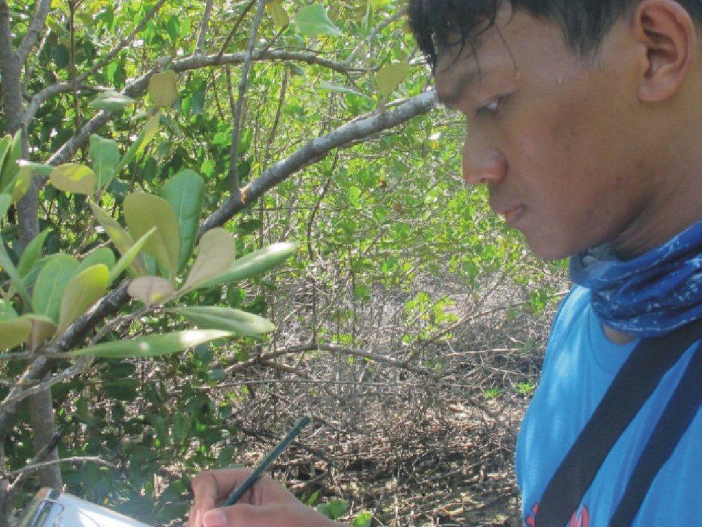Riset Analisis Vegetasi Mangrove